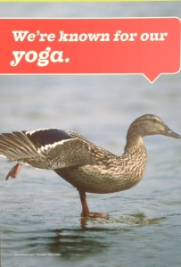yogiduck